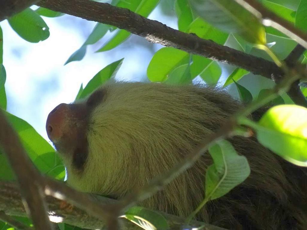 Pedacito De Cielo Sloth