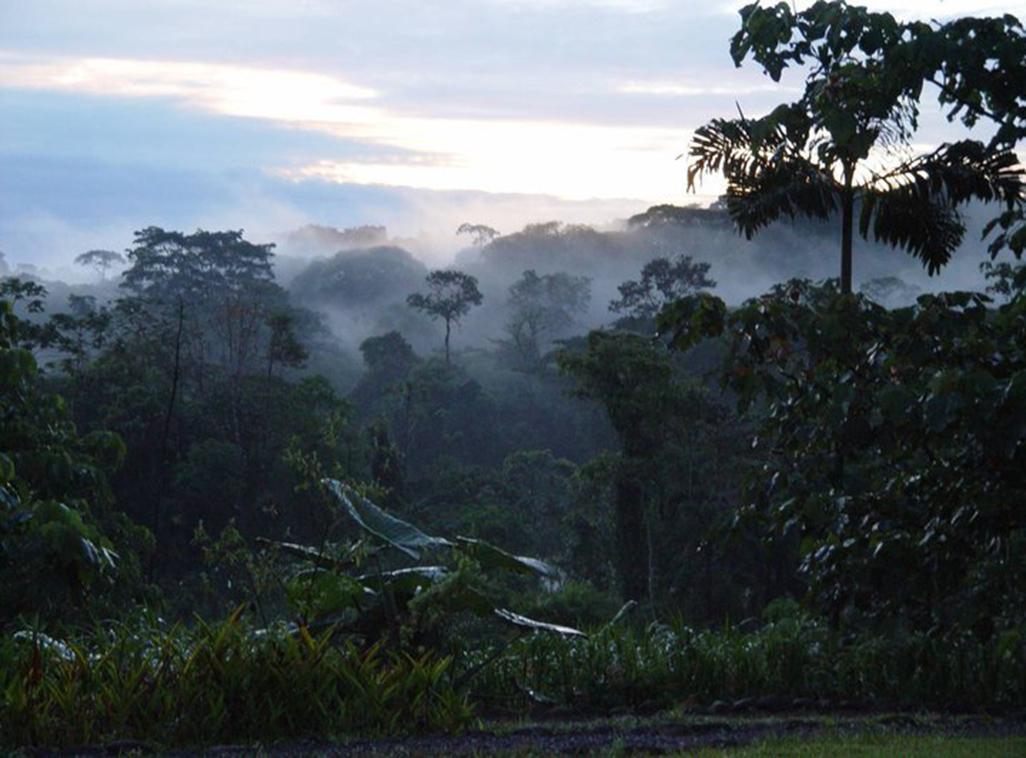 Sarapiquis Rainforest Lodge Forest