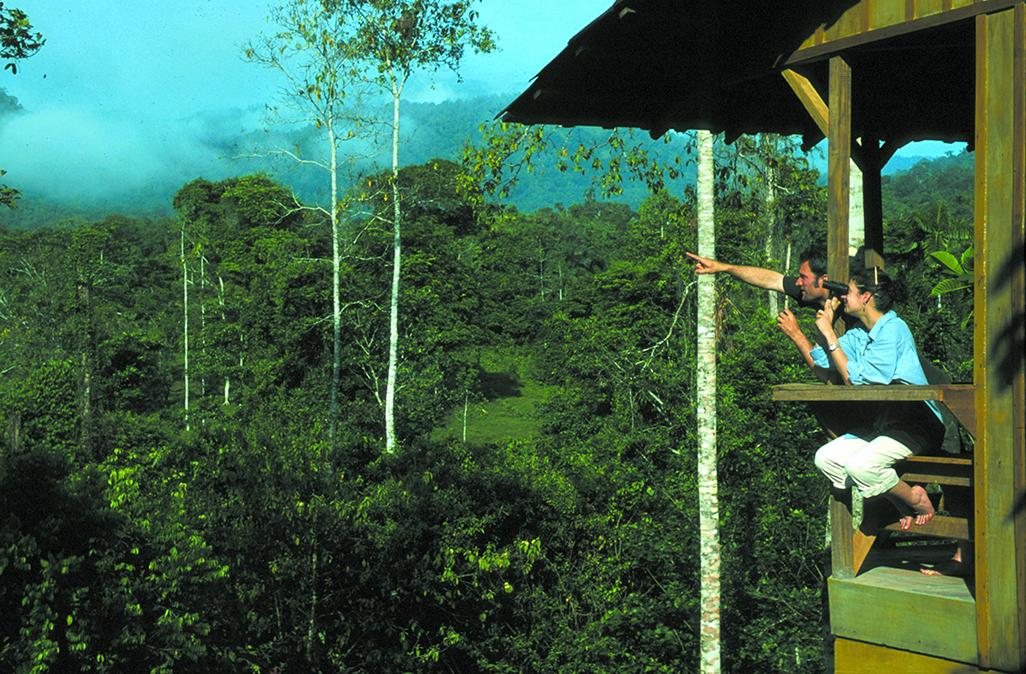 Selva Bananito View