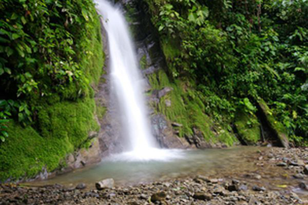 Selva Bananito Waterfall