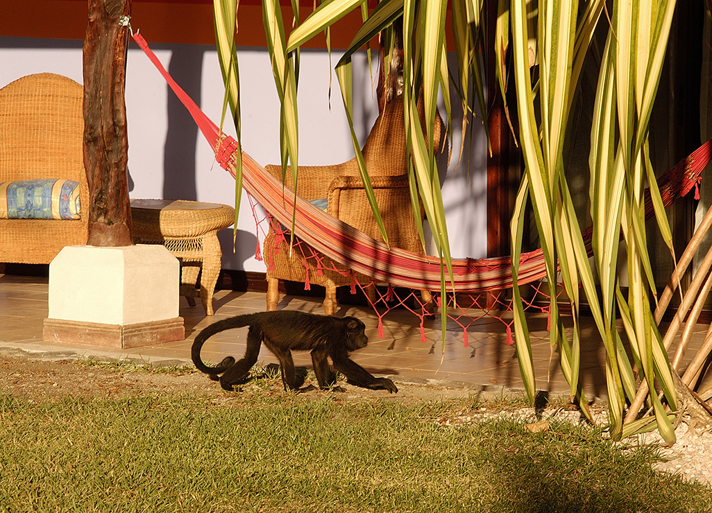 Bahia Del Sol Monkey